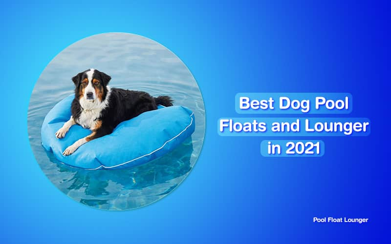 dog pool floats and lounger